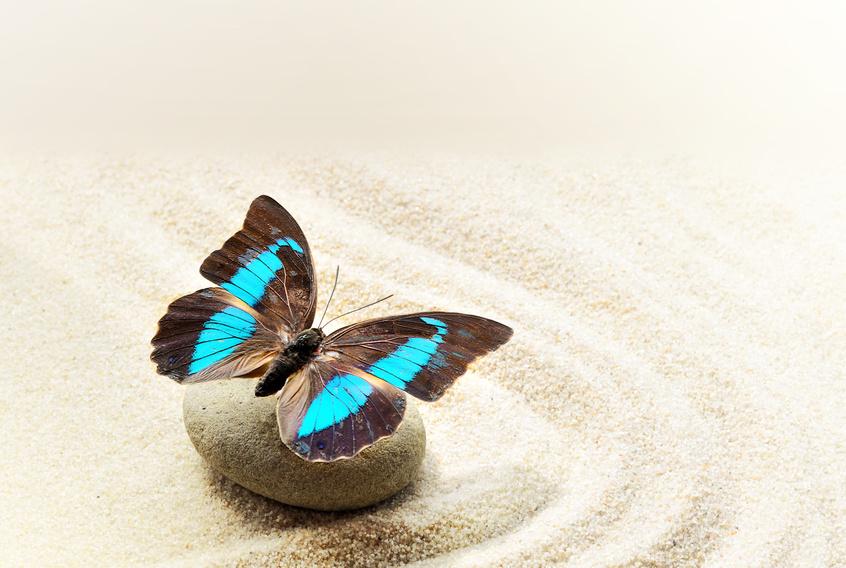 vlinder in zand diplomatie